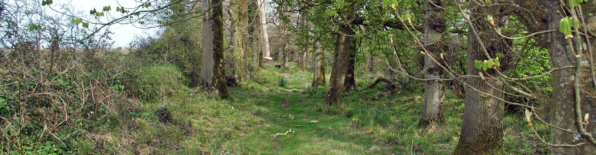Country walk at Killiane Castle